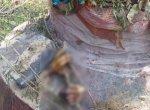 '12 வருடங்களாகப் பதப்படுத்தப்பட்ட 5 பழங்குடியினரின் கைகள்?' - ஒடிஷா போலீஸை அதிரவைத்த சம்பவம்