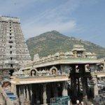 `திருவண்ணாமலை மகா தீபம்!' - வேலூரிலிருந்து 300 சிறப்பு பஸ்கள் இயக்கம்