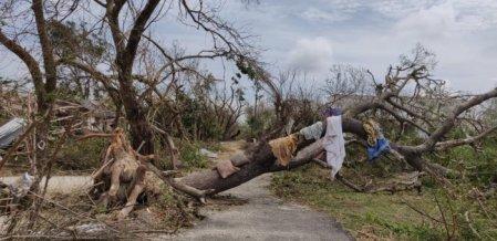 விழுந்து கிடக்கும் டெல்டா... நம்பிக்கையைத் துளிர்க்கச் செய்த கரங்கள்! #GajaCyclone