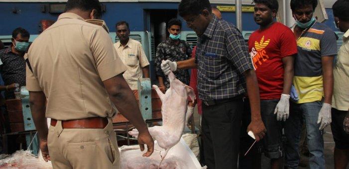 சென்னையில் 1,000 கிலோ கெட்டுப்போன இறைச்சி...  கேங்ஸ்டர்களின் பின்னணி என்ன?