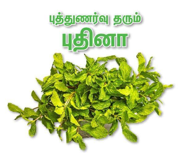 புதினா