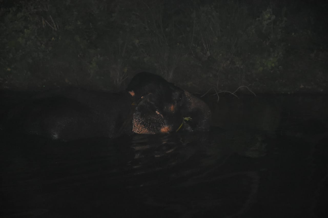 ஆற்றில் யானை