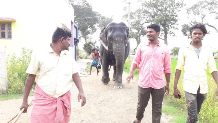 Sumathi elephant