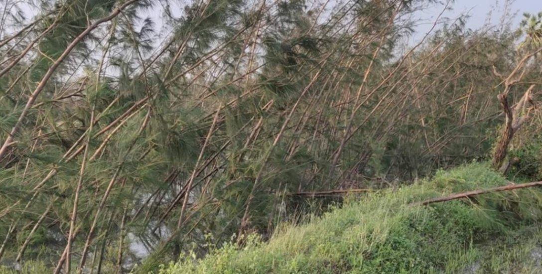 `உழவன்' ஆப் மூலம் மரம் கொள்முதல்... `கஜா' பாதிப்பு விவசாயிகளுக்கு புது அறிவிப்பு!