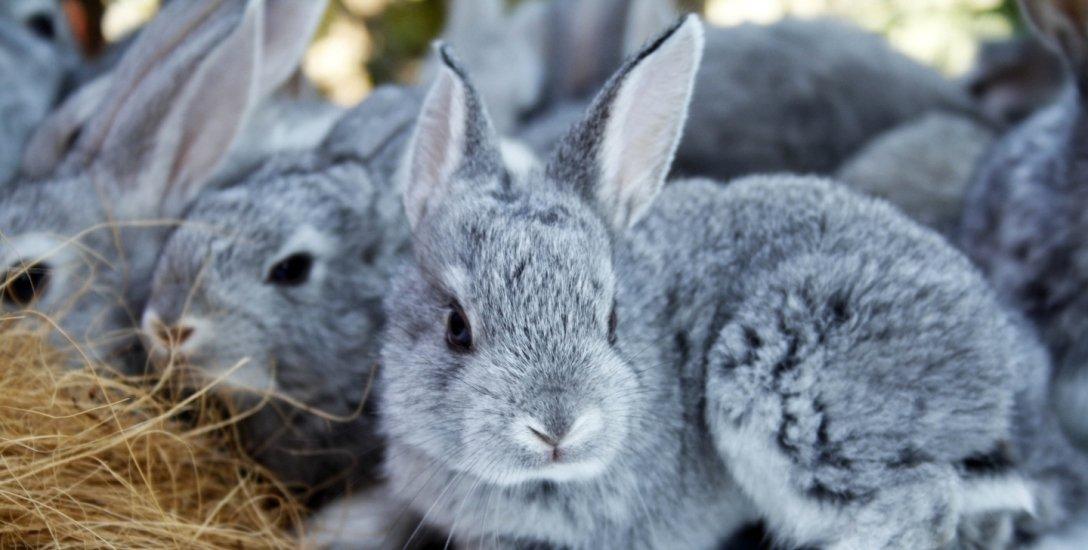 600 சதுரஅடி போதும்... முயல் வளர்ப்பில் அசத்தலான லாபம் பார்க்கலாம்! #RabbitFarming