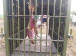 '11 ஆடுகளைக் கடித்துக் கொன்ற சிறுத்தை!' - பீதியில் வாணியம்பாடி மக்கள்