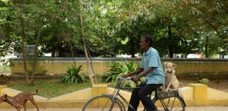 நாய்களுக்காக நைட் ஷிஃப்ட்... 71 வயது கோவை முதியவரின் கதை!