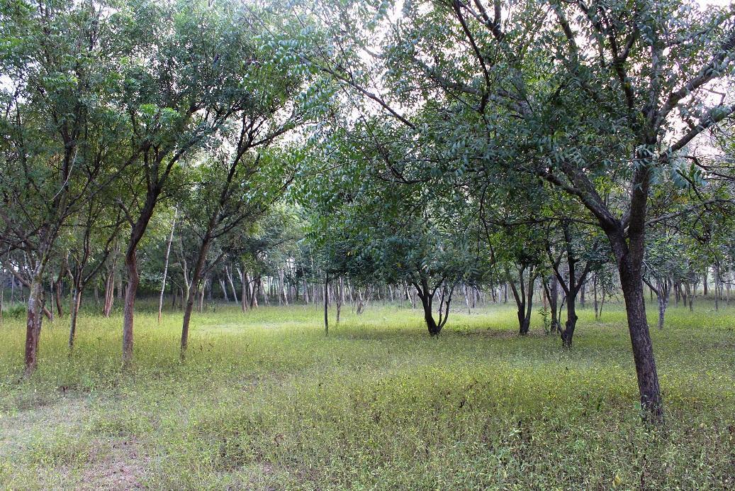 காடு, பூநெய்தாங்கல்