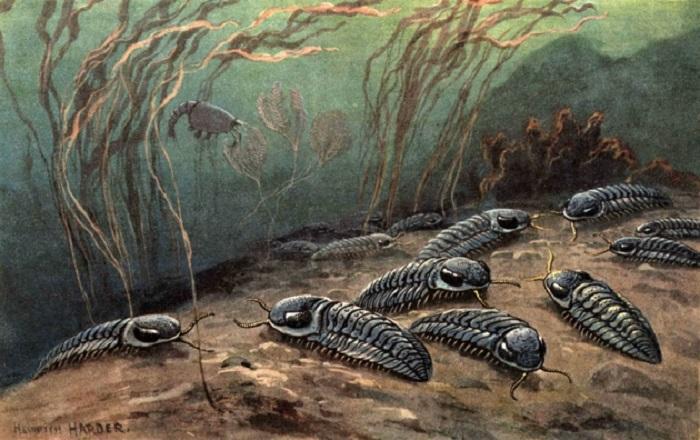 தொல்லூழியின் நீர்வாழ் உயிரினங்கள்