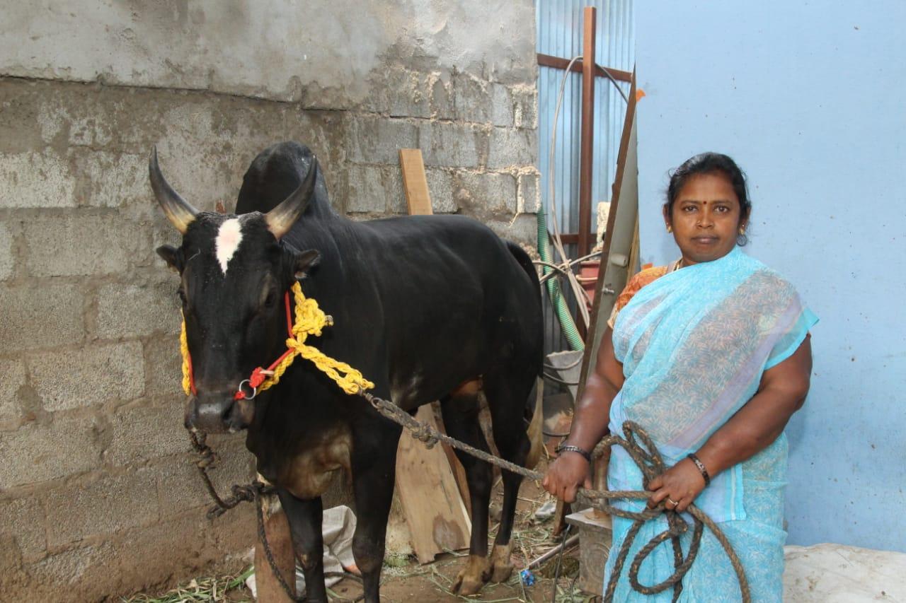 காளை கருப்புடன் ரஞ்சித் அம்மா
