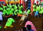 `1400 காளைகள்; 848 மாடுபிடி வீரர்கள்!' - கோலாகலமாகத் தொடங்கிய அலங்காநல்லூர் ஜல்லிக்கட்டு