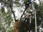 'கையகப்படுத்திய நிலத்திற்கு இழப்பீடு கொடு!' -மரத்தில் ஏறி விஷம் குடித்த நபரால் வேலூரில் பரபரப்பு