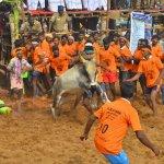 300 காளைகள்;500 மாடுபிடி வீரர்கள் - சிவகாசி அருகே 18 கிராமமக்கள் பங்கேற்ற ஜல்லிக்கட்டு!