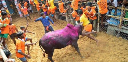 `ஜல்லிக்கட்டு வீரர்களுக்கு மருத்துவக் காப்பீடு' - அமைச்சர் விஜயபாஸ்கர் அறிவிப்பு!