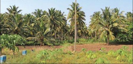 10 Lakhs per Annum, Organic Farm Thriving at Zero Budget!