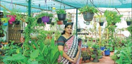 Vegetables to Flowers...Value of Terrace Garden!