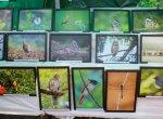 150 வகை பறவைகள்; 86 வகை பட்டாம்பூச்சிகள்... நம்புங்க, புதுச்சேரிலதான் இவ்வளவும் இருக்கு!