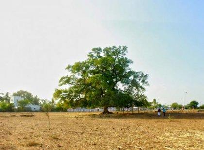 ``எனக்கு மனக்கஷ்டம் வரும்போதெல்லாம் இந்த 100 வயசு வேப்பமரம்தான் ஆறுதல்!