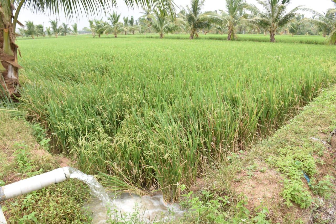 கஜா புயல் நிவாரணம்