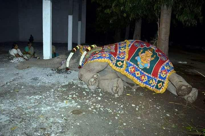 யானை ருக்கு