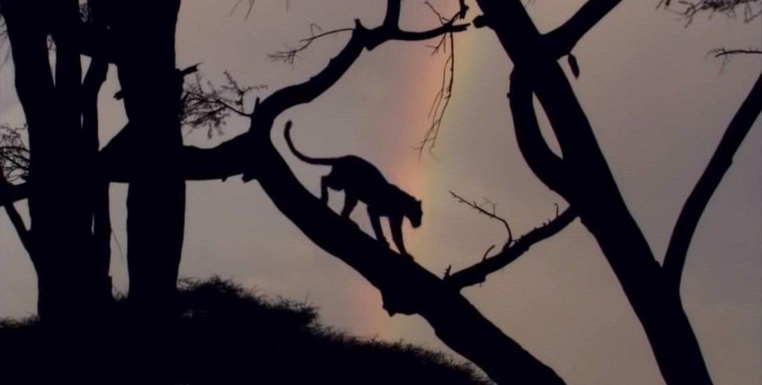 `கழுதைப்புலிகள் வந்துவிட்டால் அன்றைக்கு பட்டினிதான்!'  சிறுத்தைப்புலிகளின் சர்வைவல் கதை
