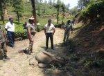 நீலகிரி தேயிலைத் தோட்டத்தில் இறந்த நிலையில் 6 மாத குட்டி யானை - வனத்துறை விசாரணை