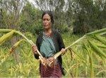 900 விவசாயிகளுக்கு மறுவாழ்வு... மஞ்சள் மூலம் சாதித்த மேகாலயா ஆசிரியர்!