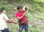 30 வருடங்களில் மீட்ட 2,500 விலங்குகள்... விலங்குகளின் `சூப்பர்மேன்' போரா!