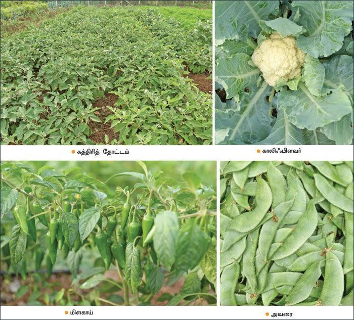 vegatables from organic farming