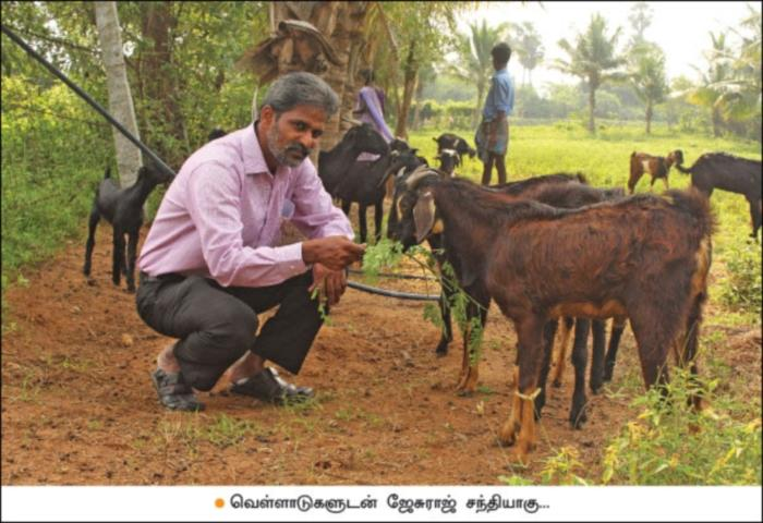 Jesuraj with goats