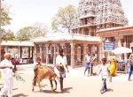 நேர்த்திக் கடன் செலுத்தும் பக்தர்கள்... விழாக்கோலம் பூண்ட அழகர் மலை