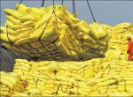 Agri Export for abundant income... Successful Strategies - Part 2