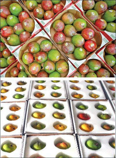 Agri Export - Fruits