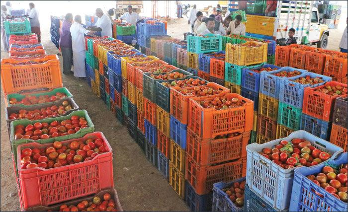 Agri Export Fruits