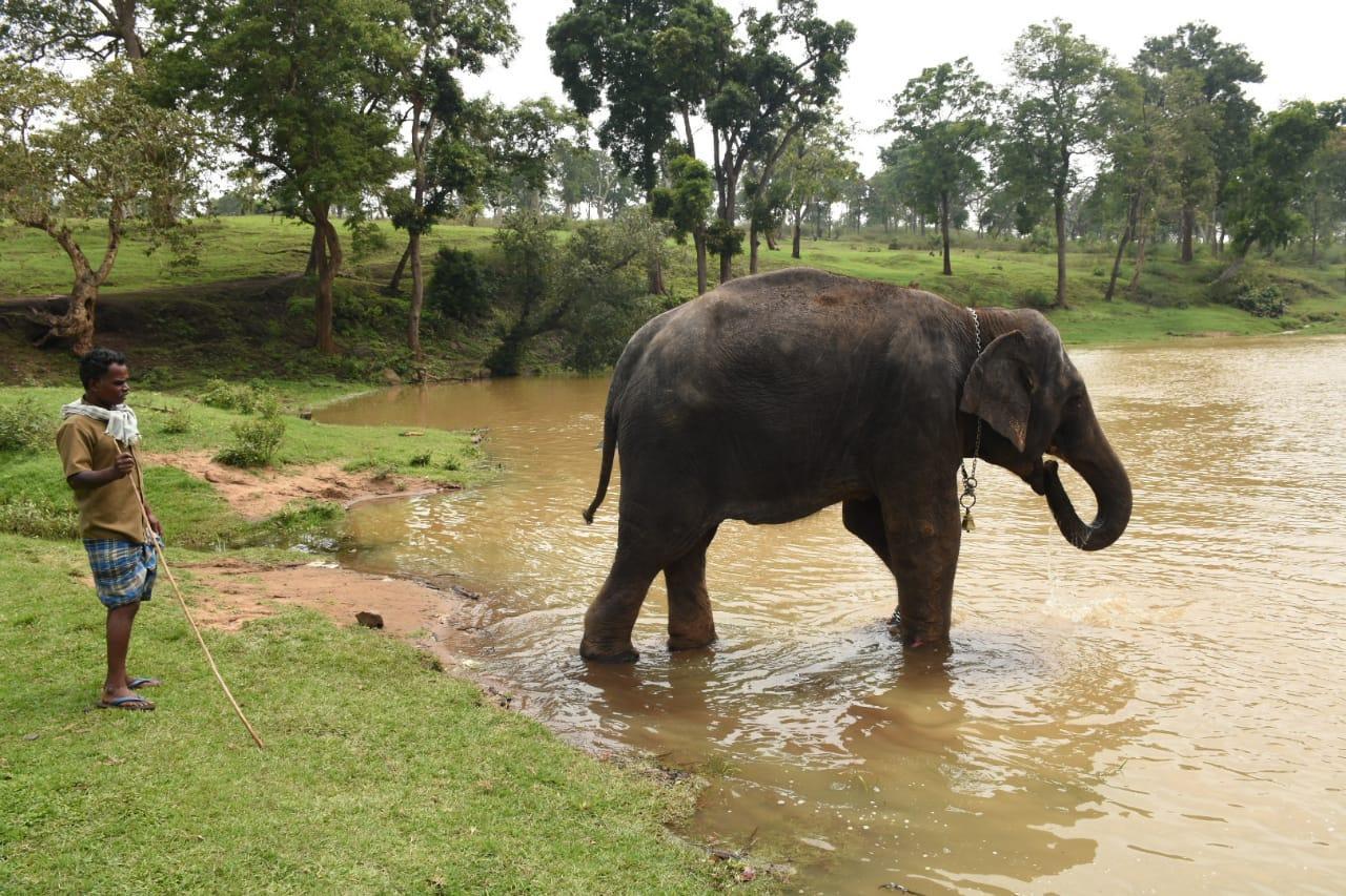 Masini elephant
