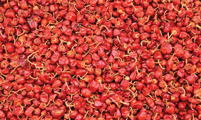 chillies - Agri export