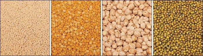 gram varieties - Agri Export