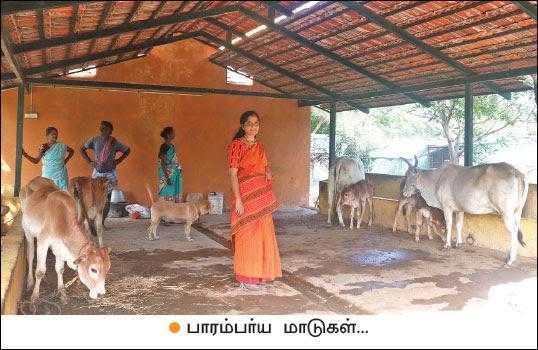 Malini with her livestocks