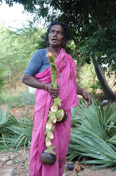 பனை பாலம்மா