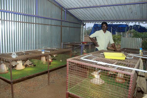 கோழிக்குஞ்சுகளுடன் பொன்னுசாமி