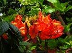 வண்டலூர் பூங்காவில் வெளிநாட்டு மரங்கள்... நாட்டு மரங்களுக்கு ஆபத்தா?!