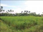 Low expenditure, fulfilled profit... Farm flourishing based on the principles of Nammalvar!