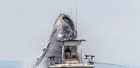 'திமிங்கிலத்தின் பிரமாண்ட டைவ்' - நூலிழையில் தப்பிய மீனவக்கப்பல்! #ViralVideo