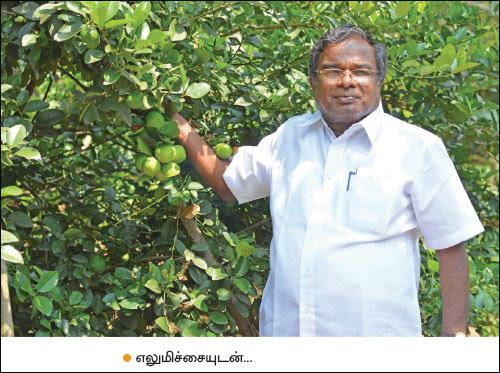 intercrops - Muthuvel Pandian