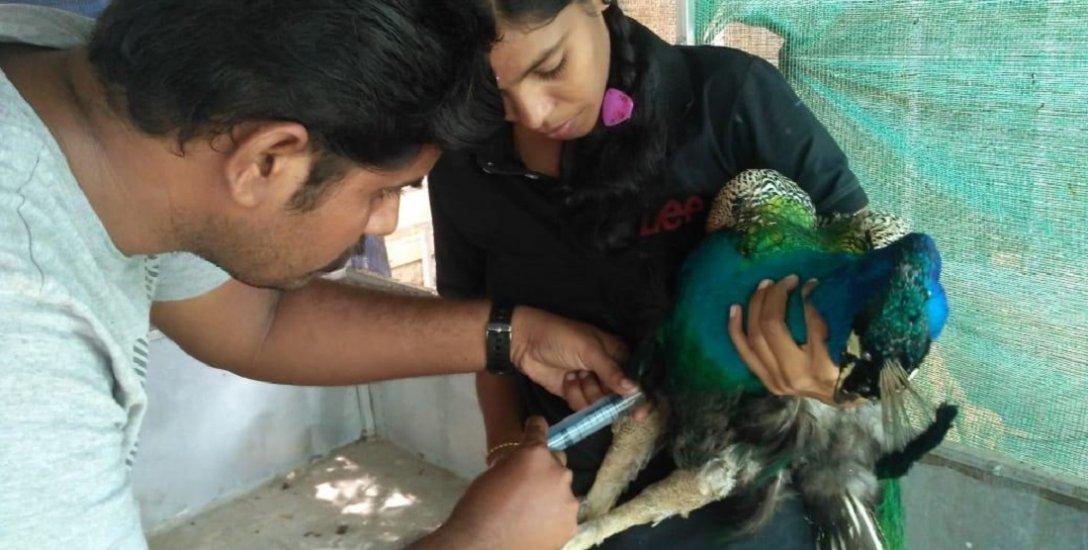 அடிபட்ட விலங்குகளைப் பாதுகாக்கும் ராஜபாளையம் விலங்குகள் நல மையம்... 5 ஆண்டுகளில் 470 உயிரினங்கள் மீட்பு!