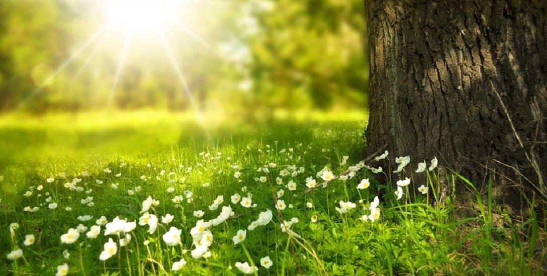`மரம் வளர்த்தால், மழை வரும் என்பது உண்மைதானா?' ஓர் அலசல்!