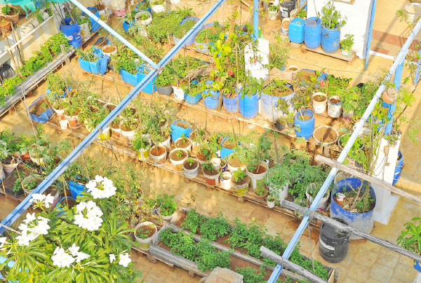 Fill Your Terrace With Flowers And Herbs Gardening Tips Poovali News7 Tamil Youtube
