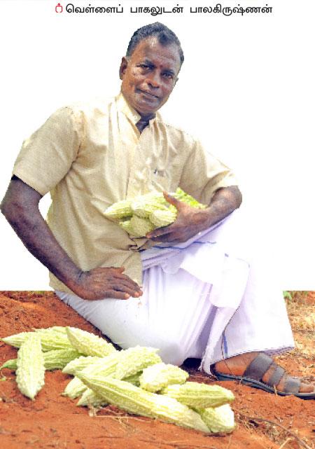15 சென்ட்... 150 நாள்... 70 ஆயிரம் ரூபாய் லாபம்! P20b