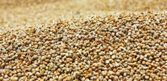 நாட்டுக்கம்புக்கு நல்ல விலை... குவிண்டால் 4,500 ரூபாய்