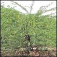 'சீமைக்கருவேல மரங்களை அகற்றினால்தான் ஜாமீன்' - அரியலூர் நீதிமன்றத்தின் அதிரடி தீர்ப்பு!